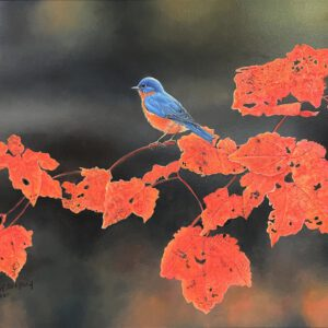 bluebird and maple
